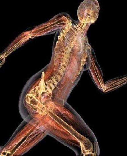 Anatomía Humana para las Terapias Complementarias | FUNDACIÓN PINDAL